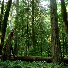 Forest Industry Applauds committee report on transformation of sector