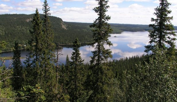 Environmental impact assessment program for Finnpulp's new softwood pulp mill to be launched