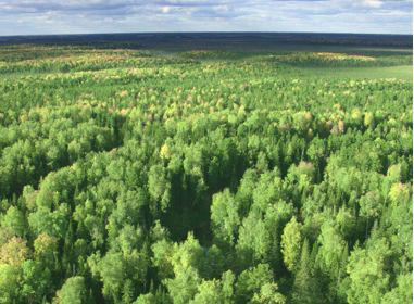 RusForest engages Hekotek to build Wood Pellet Plant in Magistralny