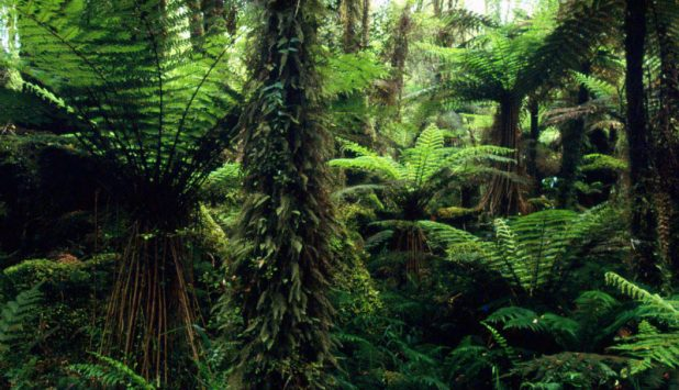 New Zealand Forests gain international visibility
