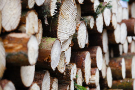 Södra reduces price of standard saw logs and small dimension softwood, and raises price of hardwood logs