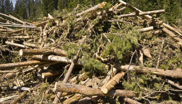 SDTC Funds development of oil and gas applications from forest Biomass