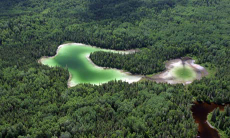 Canada's forests and its natural cycles