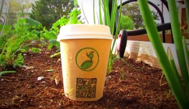 From plantable takeaway cup into a tree