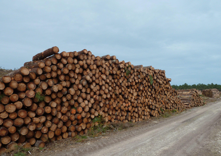 Lumber imports to China were close to record high in April