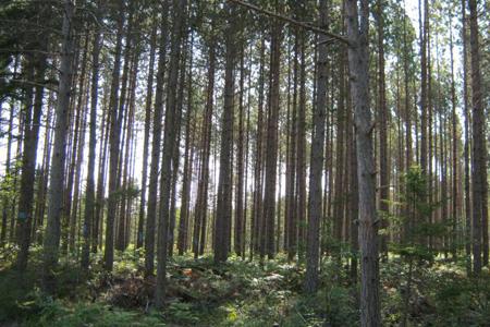 Northern Pulp's environmental footprint continues to improve