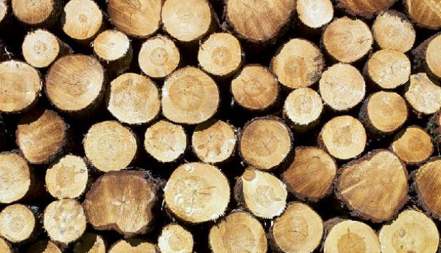 Chinese log imports trend upward in early 2016