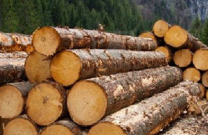 China's log imports rose 3 per cent in Q1