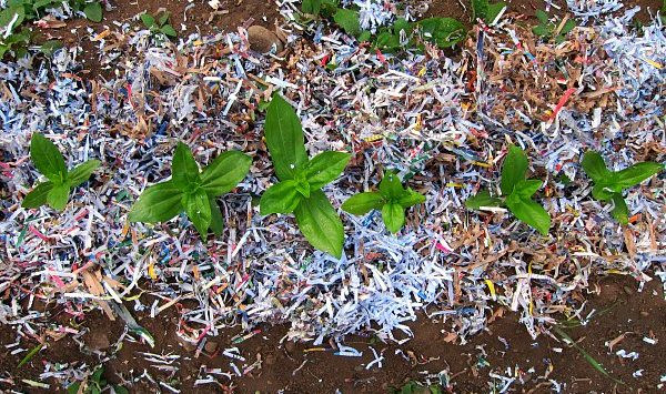 FPInnovations makes paper agricultural mulch