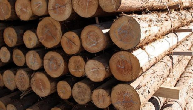 Global industry of forest products meets in Australia