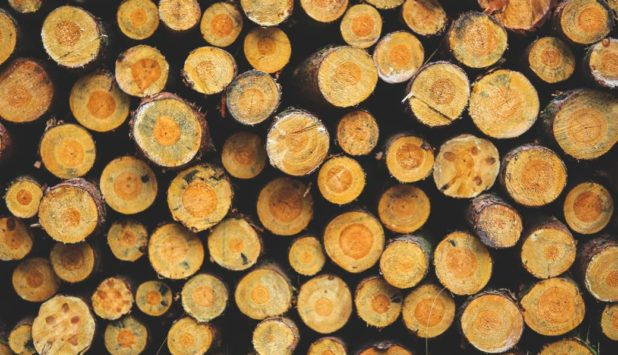 Brazil's wood product trade surplus increased by 12% in 1H 2016