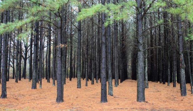 The planted trees industry grows foreign market sales