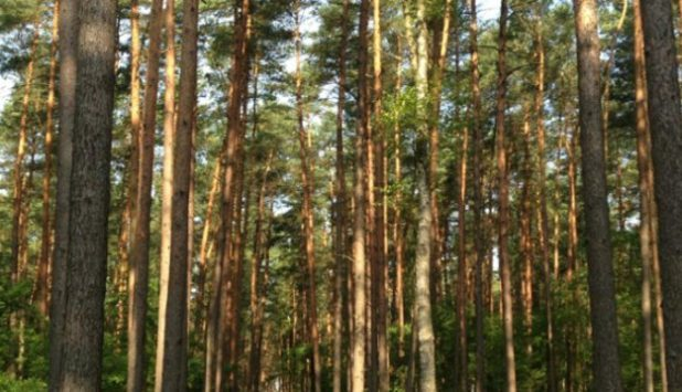Stora Enso's Nordic forest associates change the fair value of forest assets