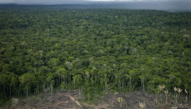 The Brazilian planted tree sector: Exports contribute to forest sector production