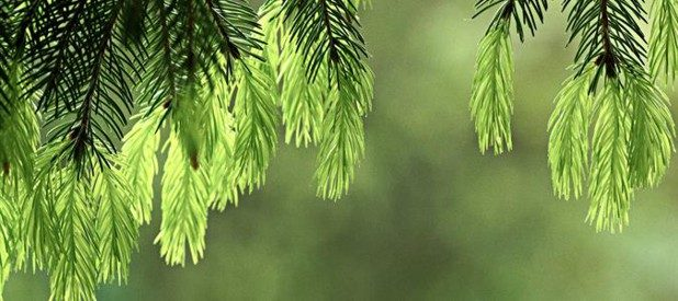 Metsä Board achieves Leadership status in CDP 2016 Forest Programme