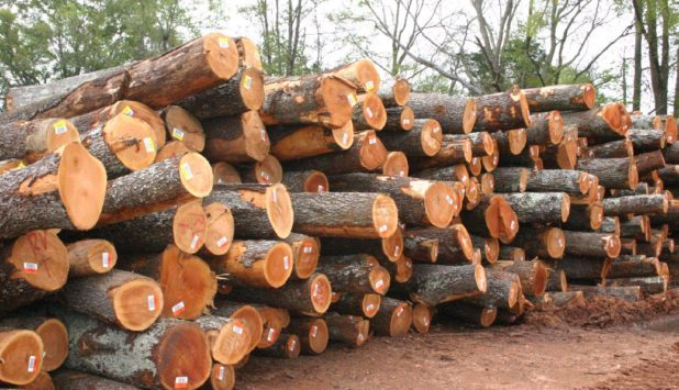 WRI estimates global demand for lumber to increase 13.6 per cent