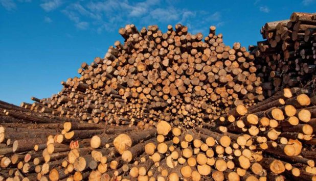 The Global Forest Industry in the 3Q/2016