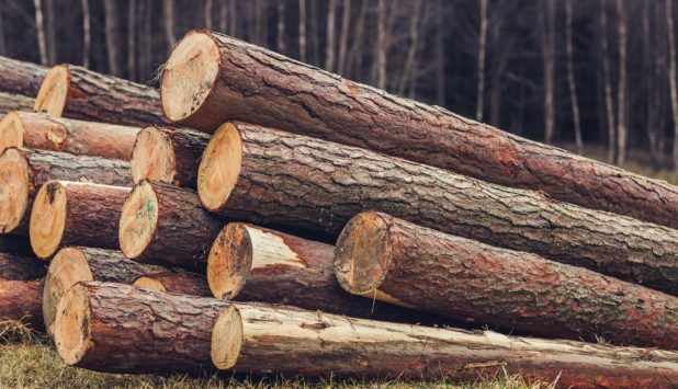 Global trade of softwood lumber forecasted to increase by almost 14% in 2016