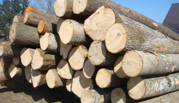 Global Timber and Wood Products market update