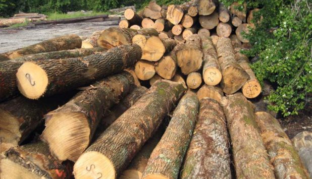 The global forest industry in the 4Q/2016