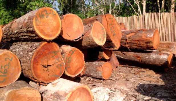 Cenários Ibá: export volume from the planted tree industry registers growth in January