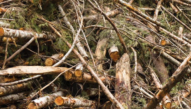 Proposed Virginia DEQ forest biomass regulation must reflect carbon reality