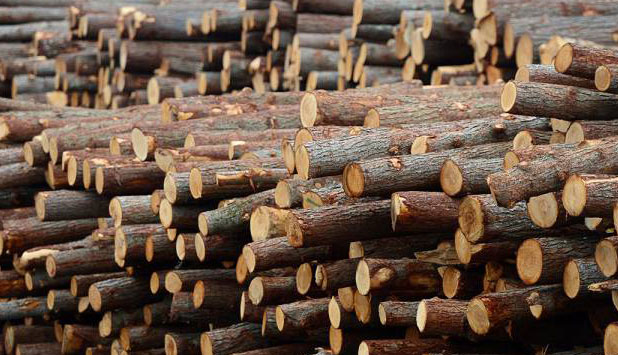 Softwood logs and softwood lumber imports to China have more than tripled in ten years