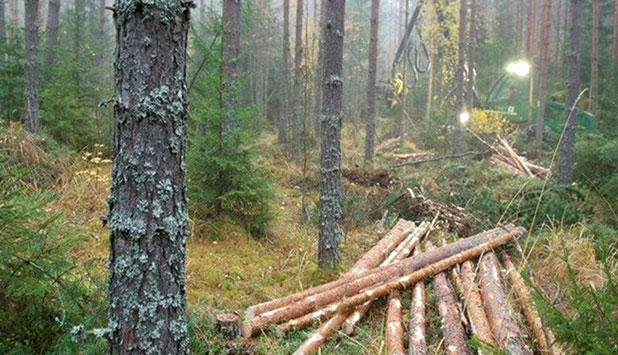 UPM increases the fair value of its forest assets in Finland and changes the accounting policy of forest renewal costs