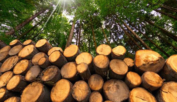 Forest stakeholders call for a stronger EU Forest Strategy