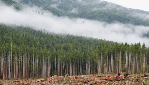 Report outlines how forest industry can fight barriers to growth