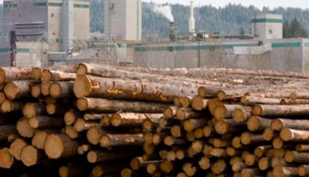 Canfor Pulp is temporarily curtailing pulp production at two mills this summer