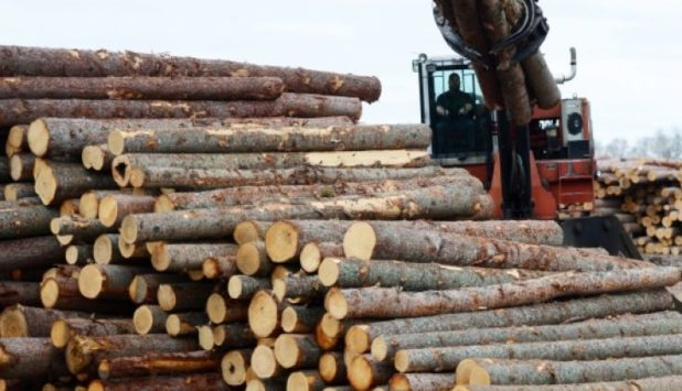 Europe has rapidly become a major supplier of softwood logs to China