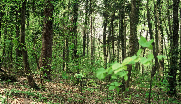 Rewarding Sustainable Forest Management practices will enhance biodiversity and climate resilience of EU forests