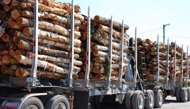 Domtar lobbies Ontario on forestry strategy