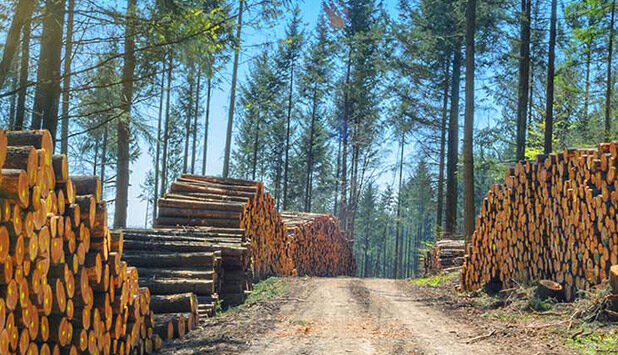 Stora Enso is changing its forest assets valuation method