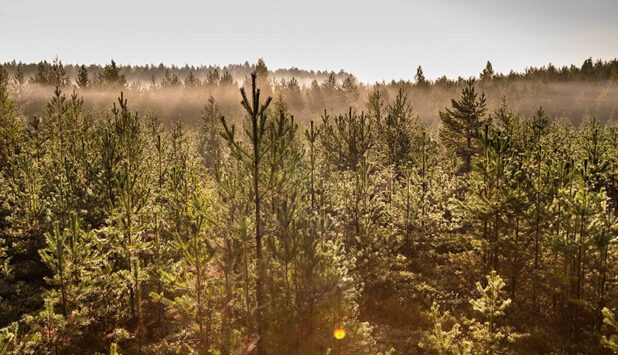 Stora Enso to sell 5,200 hectares of forestland in Sweden