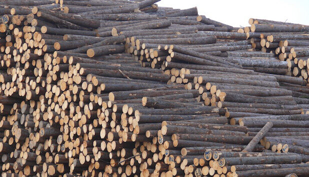 Canadian forest sector welcomes new federal advisory body on net-zero emissions