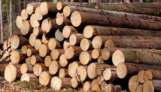 German forest certification system submitted for endorsement